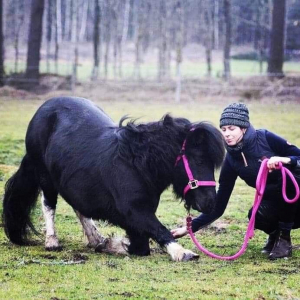 Tanja Willyard Kreativ Hästträning